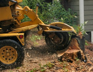 machinery for stump removal